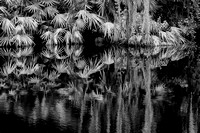 Old Florida Reflections 2