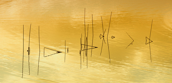 Reflecting Reeds
